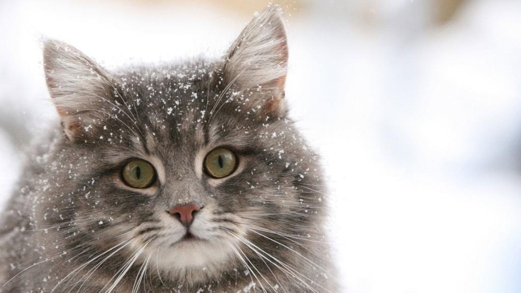А це мій кіт Дездемон! Нарешті і я котика запостила!