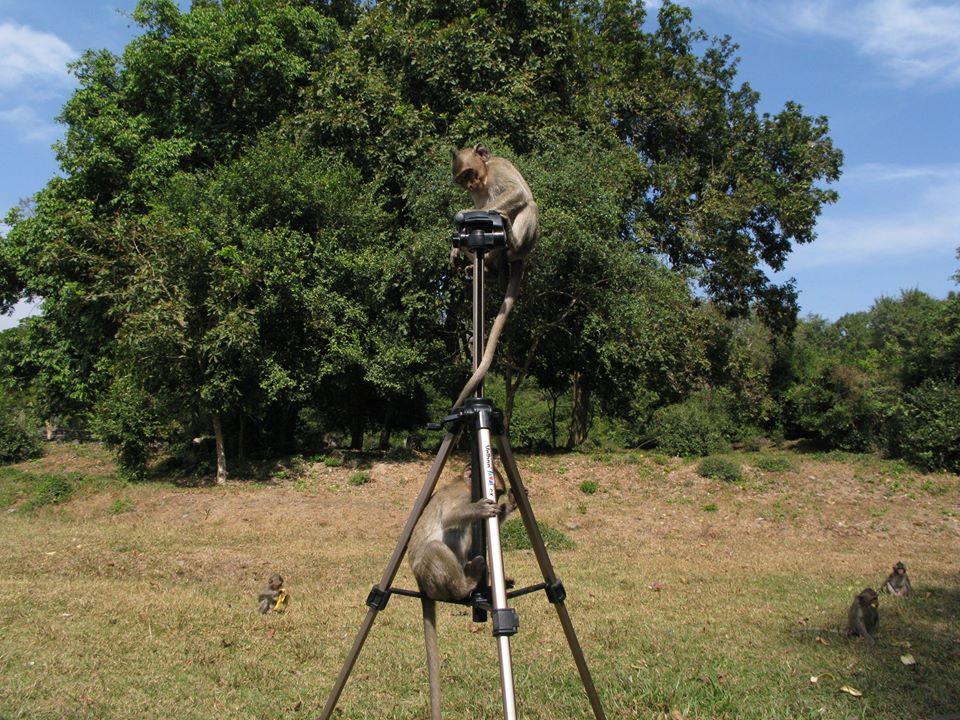 Навіть техніка була під загрозою затягнення в джунглі!